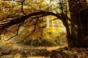 韶关上廊镇银杏林、长湖国家森林公园、茶趣园、云门寺二天游(团号:yczl)